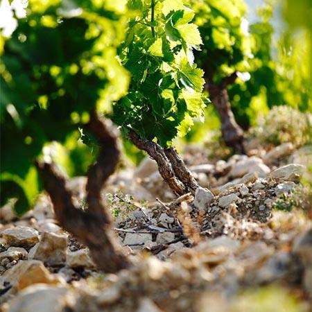 Vin de Côtes de Provence