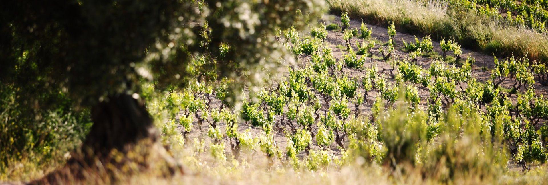 vignes-et-paysages-32-1-update=20200914135455